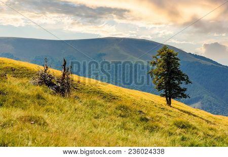 Tree On The Grassy Hillside. Apetska Mountain In The Distance. Beautiful Summer Nature Scenery In Mo