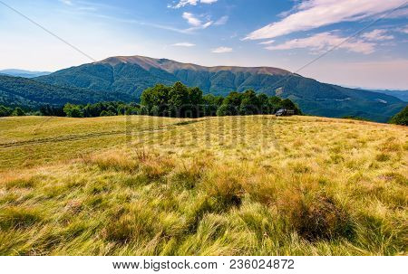 Large Grassy Meadow Of Carpathians. Gorgeous Landscape In Fine Afternoon Weather. Apetska Mountain I