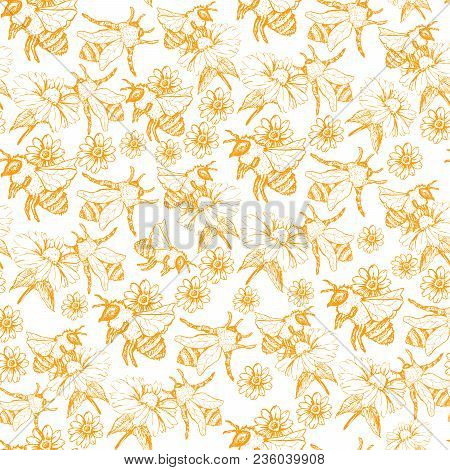 Honey Bee Seamless Pattern, Sketch Vector Illustration With Bumble Bee Hives In Vintage Style, Yello