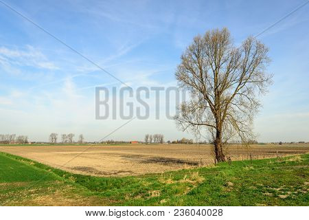 Tall Bare Tree On The Edge Of A Plowed Field In The Netherlands Early In The Morning Of A Sunny Day