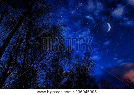Beautiful Birch Trees Against The Blue Sky With Clouds And Moon.
