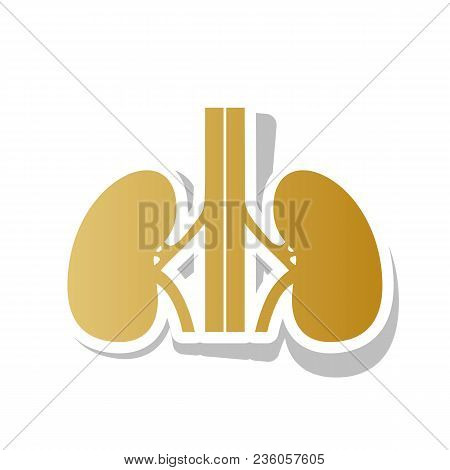 Human Anatomy. Kidneys Sign. Vector. Golden Gradient Icon With White Contour And Rotated Gray Shadow