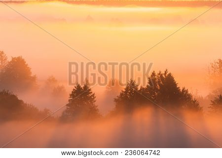 Amazing Sunrise Over Misty Landscape. Scenic View Of Foggy Morning Sky Over Misty Forest. Middle Sum