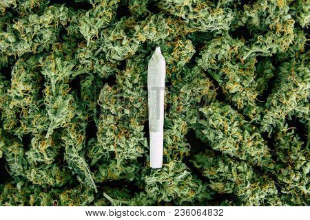Joint And Background Of Buds Cannabis, Marijuana Flower Weed Top View Copy Spase Close Up