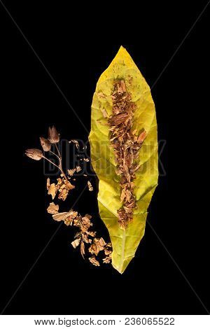 Crushed Dried Tobacco Leaf And Seeds Isolated On Black Background From Above.