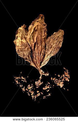 Dried Tobacco Leaf Isolated On Black Background From Above.
