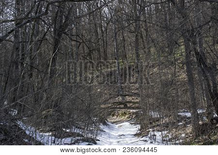 Fabulous And Contrasting Spring Forest With A Path Covered With Snow And Bright Grass Pure And No On