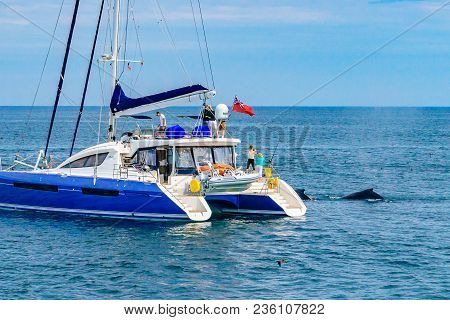 Provincetown, Cape Cod, Massachusetts, Us - August 15 2017 Catamaran And Whale