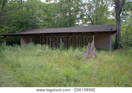 Abandoned Wooden Log Cabin In The Woods Surrounded By Trees And Green Vegetation