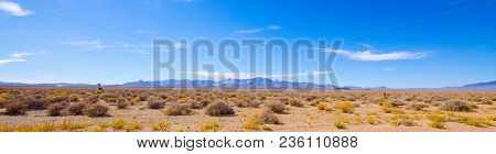 A Panorama Of The Desert Area Outside Area 51 With Desert Scrubbery, A Distant Joshua Tree And Cow A
