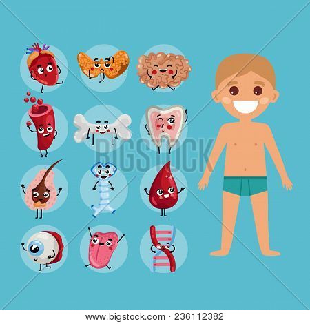 Male Body Anatomy Medical Poster With Child. Kidney, Lung, Liver, Heart, Stomach, Uterus, Intestine