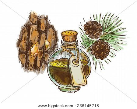 Pine Tar In A Bottle With Branch And Bark. Watercolor Imitation With Sketch. Vector Illustration.