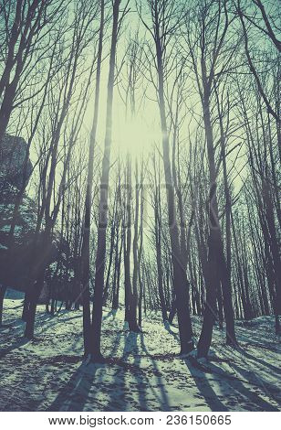 Sunlight In The Woods, Retro Film Filtered.