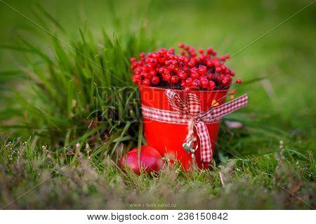 Berry Season. Red Bucket With Berries . Harvest Of Berries.organic Bio Berries