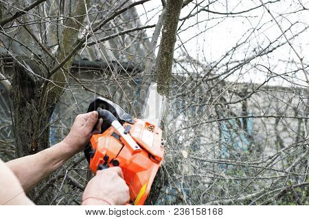 Gasoline Saw Man Directing Orders In The Garden Pale Trees Gray Blue Orange Hands