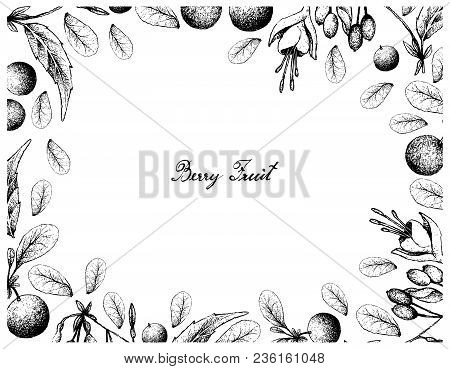 Berry Fruit, Illustration Frame Of Hand Drawn Sketch Of Bog Bilberry Or Vaccinium Uiginosum And Brin