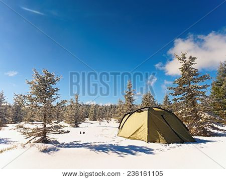 Winter Camping On Snow In The Forest. Green Tent Hidden Between Trees. Blue Sky.