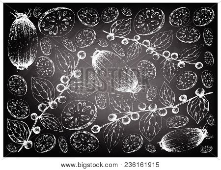 Vegetable And Fruit, Illustration Wall Paper Background Of Hand Drawn Sketch Lotus Or Water Lily Roo
