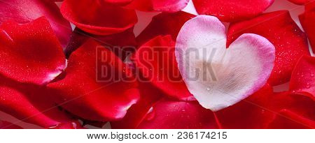 Red Rose Petals And Heart Shaped Blossom Petal.valentines Day Background.