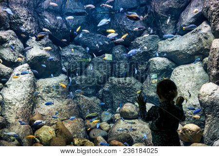 Moscow - April 2, 2018: Child Looks At The Sea Fish In Aquarium. Little Girl Admires The Aquatic Lif