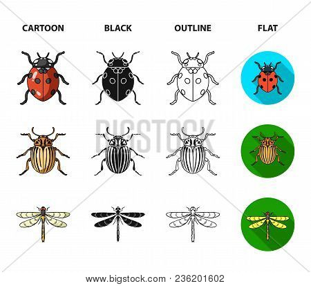Insect, Bug, Beetle, Paw .insects Set Collection Icons In Cartoon, Black, Outline, Flat Style Vector