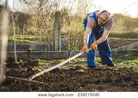 Farmer Working In The Garden With The Help Of A Rake Leveling Plowed Land, On A Sunny Day. Spring, P
