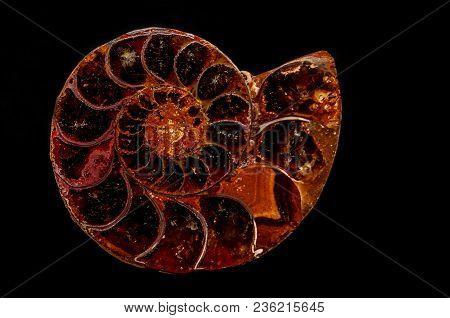 An Agate Formed Ammonite Snail Marine Invertebrate Fossil