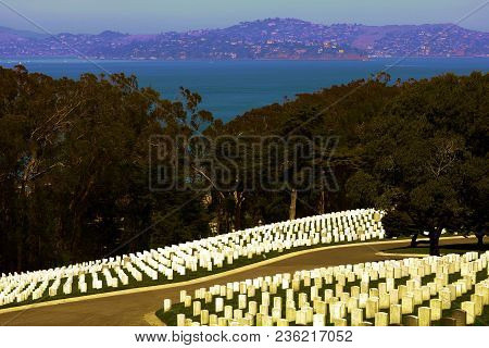 April 4, 2018 In San Francisco, Ca:  Rows Of White Headstones Surrounded By Manicured Landscaping Ta