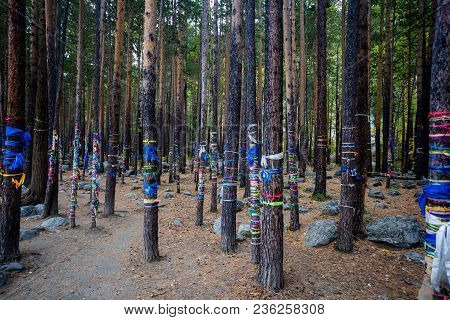 Multi-colored Ribbons On A Tree, Religion, Siberia