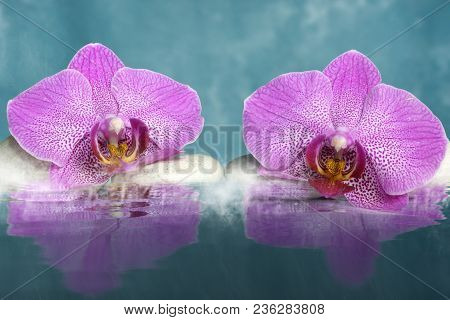 Two Orchid Flowers Lie On The Rocks Near The Water With Fog.