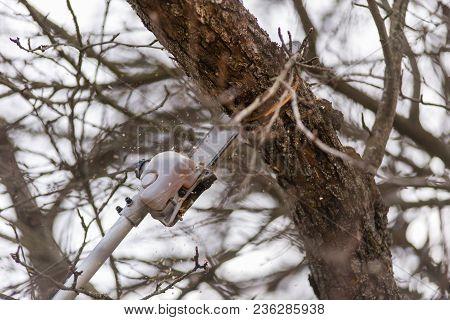Pole Saw Cutting Tree Branch