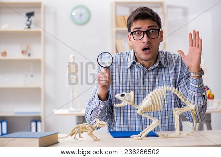 Student doctor studying animal skeleton