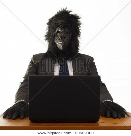 Gorilla in the office.