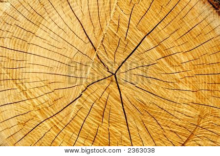 Tree Rings And Cracks