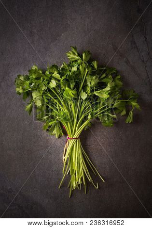 Bunch of fresh parsley on dark background. A flavorful herb and common ingredient in the kitchen.