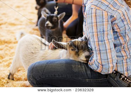 Baby Goat Young Handler