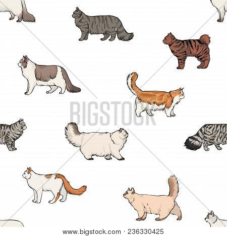 Seamless Pattern With Domestic Cats Of Various Breeds Hand Drawn On White Background. Backdrop With