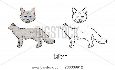 Collection Of Colorful And Monochrome Line Drawings Of Head And Body Of Laperm Cat Isolated On White