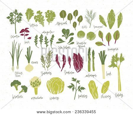 Collection Of Green Plants. Bundle Of Tasty Vegetables And Salad Leaves Isolated On White Background