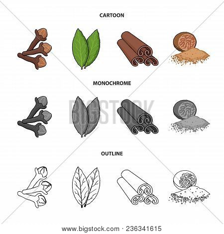 Clove, Bay Leaf, Nutmeg, Cinnamon.herbs And Spices Set Collection Icons In Cartoon, Outline, Monochr