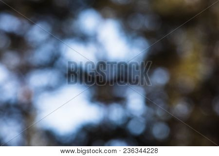 An Array Of Pine Trees With A Man Standing In Blurry Or Out-of-focus Concept