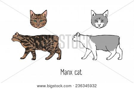 Collection Of Colored And Monochrome Line Drawings Of Head And Body Of Manx Cat Isolated On White Ba