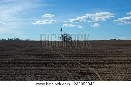 Isolated Tree In The Middle Of A Cultivated Field. Through The Field Leads The Track From The Bicycl