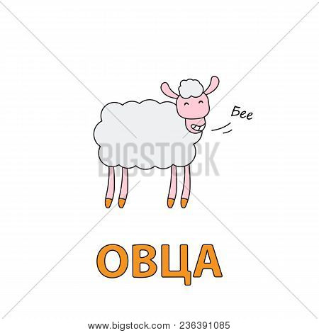 Cartoon Sheep Flashcard. Vector Illustration For Children Education With Sheep Text In Russian Langu
