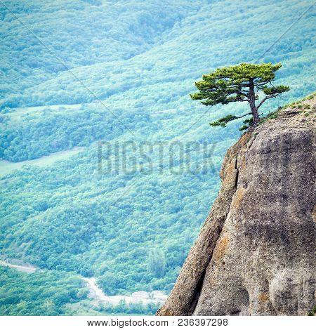 Lonely Tree On A Rock At Demerdji Mountain, Crimea, Russia. Landscape Of Crimea. Beautiful View Of C