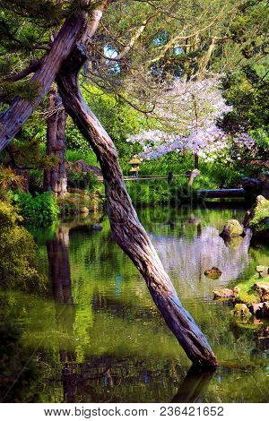 Lush Green Plants And Trees Surrounding A Pond With Calming Still Water Taken At A Japanese Zen Medi
