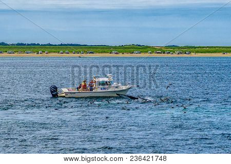 Provincetown, Cape Cod, Massachusetts, Us - August 15 2017 Boat, His Crew And Whale.