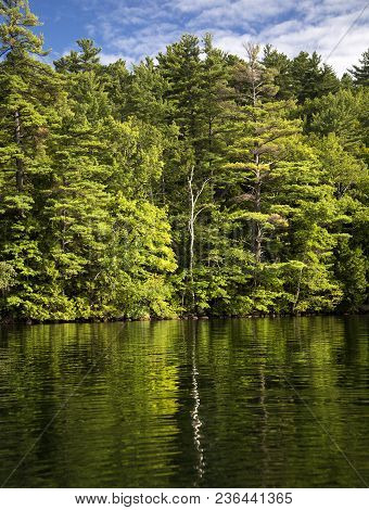 Rippled Reflections Of Trees In Squam Lake, New Hampshire