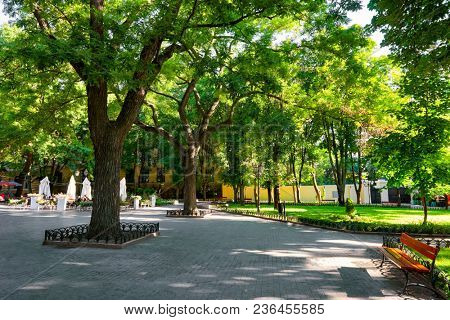 morning in summer city park, bright sunlit, green trees and shadows