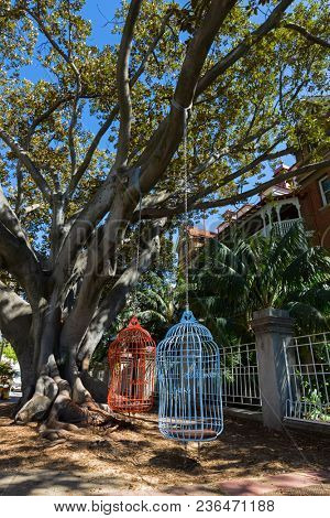 Two human-sized large bird cage seats hanging from Moreton Bay Fig tree on Murray Street, City of Perth, Western Australia
